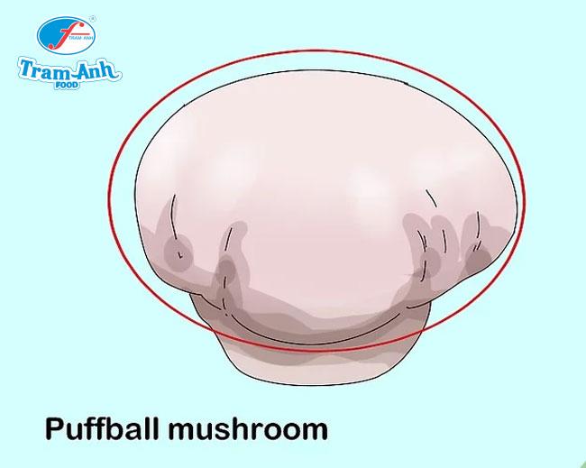Tìm nấm Puffball bằng cách quan sát mũ nấm hình cầu màu trắng hoặc màu da.