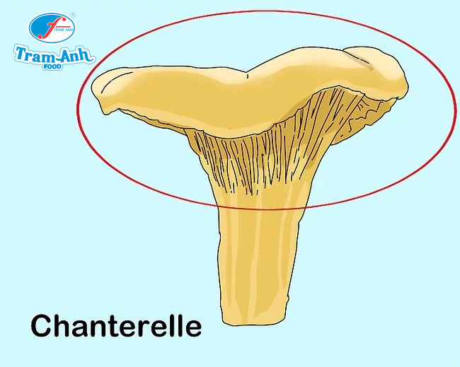 Quan sát mũ nấm nhỏ, lõm ở giữa để xác định nấm mào gà (Chanterelles).